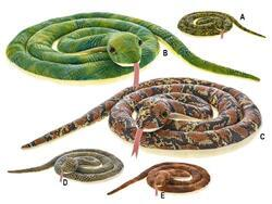 Had plyšový 170cm 5barev 0m+ v sáčku