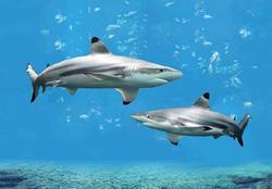 Pohlednice 3D 16cm - žraloci(25)