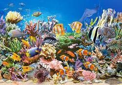 Puzzle mořský svět 260dílků