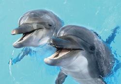 Pohlednice 3D 16cm - delfíni(25)