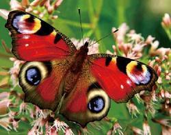 Magnet 3D 7x9cm - motýl