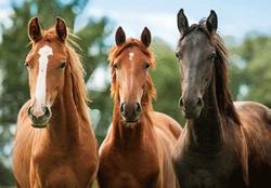 Pohlednice 3D 16cm - koně