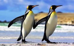 Prostírání 3D 30x40cm - tučňáci