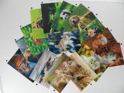 Pohlednice 3D 16x11cm zvířátka (18)
