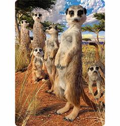 Pohlednice 3D 16cm - surikaty (25)