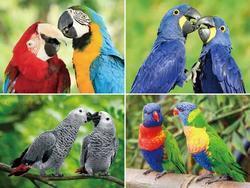 Prostírání 3D 30x40cm - papoušci(10)