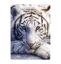 Pohlednice 3D 16cm - bílý tygr (25)