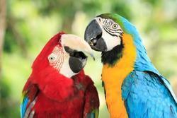 Pohlednice 3D 16cm - papoušci(25)