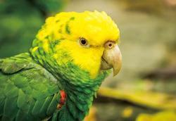 Pohlednice 3D 16cm - papoušek amazoňan