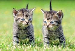 Pohlednice 3D 16cm - koťátka(25)