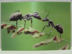 Pohlednice 3D 16cm - mravenci(25)