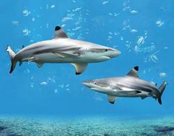 Magnet 3D 7x9cm - žraloci(25)