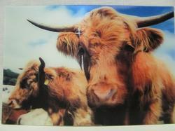 Pohlednice 3D 16cm - kráva
