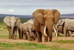 Pohlednice 3D 16cm - sloní rodina