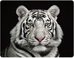 Magnet 3D 7x9cm - tygr bílý (12)