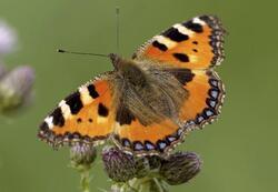 Pohlednice 3D 16cm  - Motýl (25)