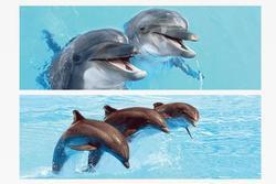 Záložka 3D s pravítkem 15,5 x 5,4cm - delfíni(25ks/bal)