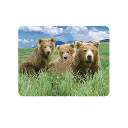 Magnet 3D 7x9cm - medvěd hnědý (25)