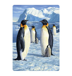 Pohlednice 3D 16cm - tučňáci (25)