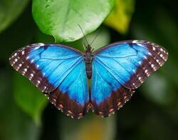 Magnet 3D 7x9cm - motýl morpho(25)