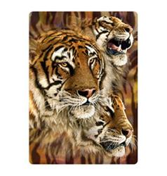 Pohlednice 3D 16cm - tygr hnědý hlavy (25)