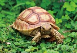 Pohlednice 3D 16cm - želva