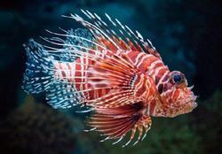 Pohlednice 3D 16cm - ryba perutýn(25)