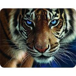 Magnet 3D 7x9cm - tygr hnědý modré oči (25)