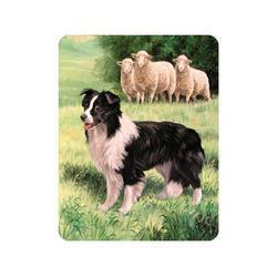 Magnet 3D 7x9cm - pes border kolie a ovce (25)