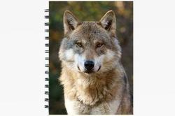 Notes 3D 14x19cm - vlk (12)